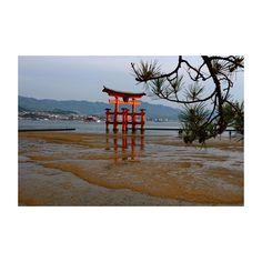 (o´β`o) 今日の一言かもん ○ 今日は、23歳の誕生日でした�� みんなが、アラサーっていじめますw まだまだ、ピチピチの23歳… でも、リアルにおじさんになってきてます(´口`) いや〜〜〜ww ○ ○ Today is my 23rd birthday. ーーーーーーーーーーーー #igersjp#s_shot#lovers_nippon#ig_japan#bestworldpics#love_all_sky#view#beautiful#cool#nice#follow#instalike#instagood#Instagram#world_bestsky#イマソラ#空好きな人と繋がりたい#写真好きな人と繋がりたい#ファインダー越しの私の世界#写真撮ってる人と繋がりたい#旅#ダレカニミセタイソラ#sky#photo#love#そらふぉと#おはよう #photography#ocean厳島神社#誕生日 http://tipsrazzi.com/ipost/1507272725314634824/?code=BTq6I7MA4RI