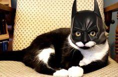 quand je me leve la nuit jespere toujours tomber sur la vrai identite de mon chat