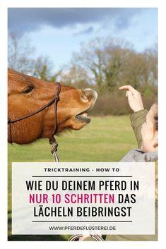 Tricktraining beim Pferd: Lektion 1 - das Lächeln! Im Artikel erfährst du wie du deinem Pferd ganz einfach und in wenigen Schritten das Lächeln beibringen kannst - macht superviel Spaß - für Pferd und Mensch