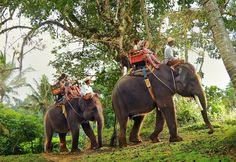 Elephant rides in Bali is considered a must-visit activity on this island. While owning the biggest and the best elephant safari park, Bali Adventure Tours is honored to provide you with an exquisite exploration tour through cool jungle of Taro. Thailand Vacation, Visit Thailand, Thailand Travel, Asia Travel, Travel Nepal, Bali Trip, Italy Vacation, Bali Elephant, Elephant Camp
