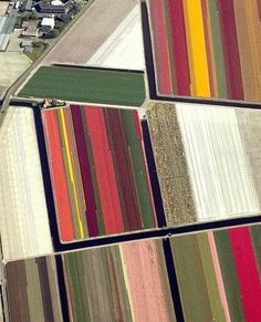 Aerial Photography - Aerial of tulip fields in Holland_2