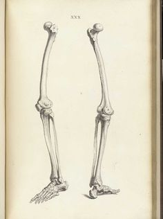 William Cheselden (https://pinterest.com/pin/287386019946927444/). Osteographia, or The anatomy of the bones, 1733 (https://pinterest.com/pin/287386019948842624/). Tab. XXX.