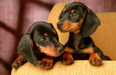 cachorritos dentro de casa