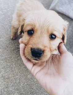 Who can resist those puppy eyes