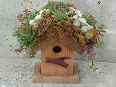 succulent covered birdhouse!