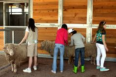 Have an up-close encounter with one of our gentle goats and sheep in the KidZooU Barnyard.