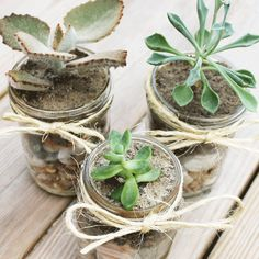 to Create Your Own DIY Mason Jar Succulents DIY mason jar succulents are incredibly easy to make. Let me some you how!DIY mason jar succulents are incredibly easy to make. Let me some you how! Mason Jar Plants, Mason Jar Succulents, Plants In Jars, Suculentas Diy, Cactus Y Suculentas, Mason Jar Christmas Gifts, Mason Jar Gifts, Mason Jar Diy, Homemade Christmas