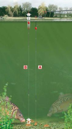 Carp Fishing Rigs Bites are unmissable