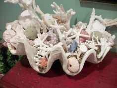Giant clam shell filled with coral, sea shells, sea urchins and star fish ~~~ Seashell Crafts, Beach Crafts, Coastal Living, Coastal Decor, Giant Clam Shell, Nautical Theme, Nautical Anchor, Beach Cottages, Beach House Decor