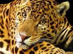 Tiger, Tiger - Tiger, Tiger: Chapter 3 - Wattpad
