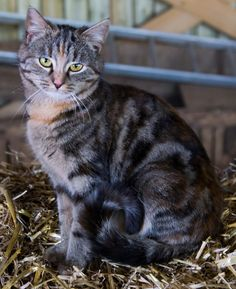 Cute cat Funny Cute Cats, Animals, Animales, Animaux, Animal, Animais