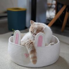 Cat Cotton Rope Woven Round Lounger for Cats Cute Japanese, Pet Mat, Kawaii Cute, Cotton Rope, Cats And Kittens, Wicker, Cushions, Puppies, Pets