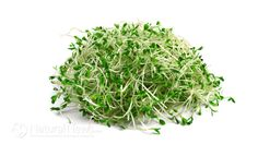 Broccoli Sprouts: Nature's Most Powerful Cancer-Fighting Food