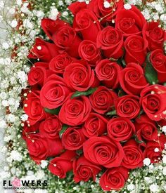 <3  Roses are Red