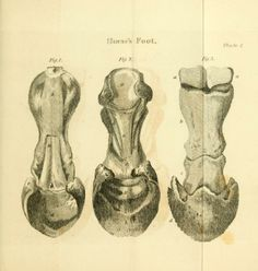 Veterinary surgery and practice of medicine, or, Farriery taught on a new and easy plan : - Biodiversity Heritage Library