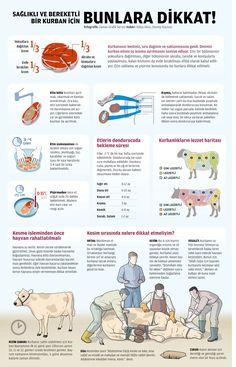 http://infografiknedir.com/wp-content/uploads/2013/12/kurban1.jpg