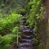 Waterfall Loop Trail - Boulder Creek,California Trails   AllTrails.com