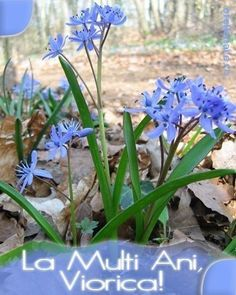 Happy Birthday, Plants, Christmas, Home, Pictures, Birthday, Happy Brithday, Xmas, Urari La Multi Ani