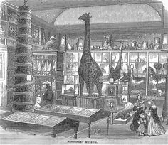victorian museums - Google Search From Illustrated London News 1843