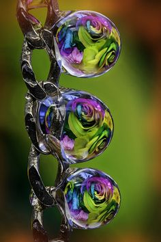 coffeenuts:  rainbow rose drops by ASPphotographic http://flic.kr/p/EVPVLe