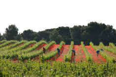 Espergura viñedo ecologico la rioja