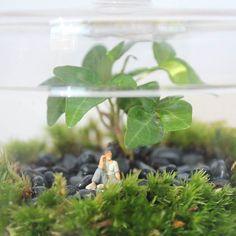Detalle del terrario anterior  . . . . . . . . #terrario #terrarios #terrarium #enelbosque #plants #plantas #nature #naturelovers #plantslovers #plantas #homedecor #minimundos #minigarden #pequeñosmundos #minijardin #deco #decoracion #creative #diseñointerior #interiorismo #diseñodeinteriores #moss #musgo #green #cristal #glass #handmade #naturaleza