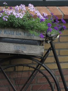 Old Bicycle with lavender and purple verbenas growing in old box. I have them growing in the ground in my garden!!