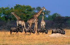 Hwange Nationalpark auf Simbabwe Reiseführer