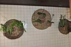 orquideas plantadas em telhas - Pesquisa Google