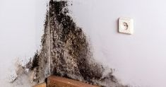 Black mold exposure and black mold poisoning can cause a wide range of health problems. Some black mold symptoms can actually be really serious. Toxic Mold Symptoms, Black Mold Symptoms, Toxic Black Mold, Clean Black Mold, Diy Pest Control, Termite Control, Black Mold Exposure, Diy Mould Removal, Homemaking