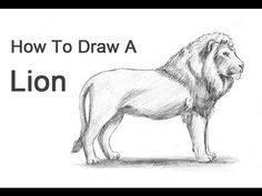 How to Draw a Lion