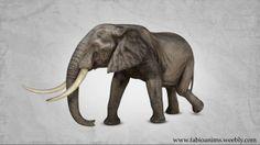Elephant Walk Cycle on Vimeo