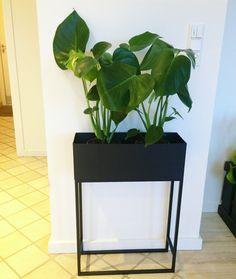 Monstera i plantekasse #plants #monstera #home #homedecor @natbensley