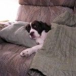 Best Puppy Top Tips and Treatments for Dog Bite Wounds  Pinned by Merja Lindroos http://multiplyprosperity.com