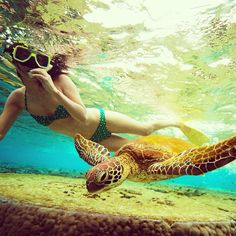 Snorkeling with seaturtles #GreatBarrier Reef #Queensland #Australia Photo by seeaustralia