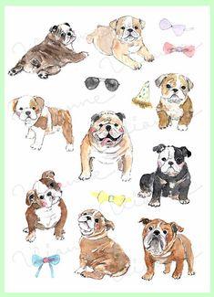 CLIP ART Set acuarela Bulldog Inglés. 16 imágenes. por Vianneart