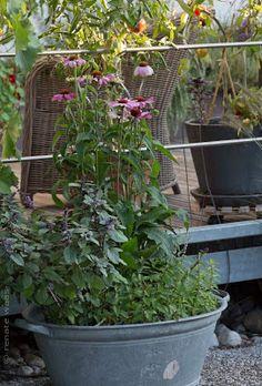 Geniesser-Garten : Gartenbilder September