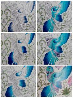 Etapas das composição em degradê do beija- flor do Jardim Secreto