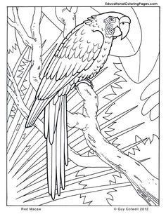 macaw coloring pages, birds coloring