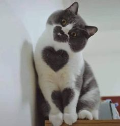 love - your daily dose of funny cats - cute kittens - pet memes - pets in clothes - kitty breeds - sweet animal pictures - perfect photos for cat moms Cute Little Animals, Cute Funny Animals, Little Dogs, Funny Cute Cats, Funny Pets, Cute Cats And Kittens, Baby Cats, Kittens Cutest, Cute Kitten Pics