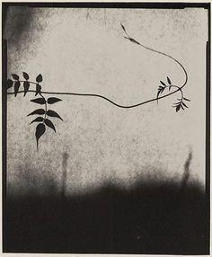 Andrew Sanderson - Jasmine - Bircham Gallery, Norfolk. www.andrewsanderson.com Copyright Andrew Sanderson. Black and white, analogue, film, darkroom