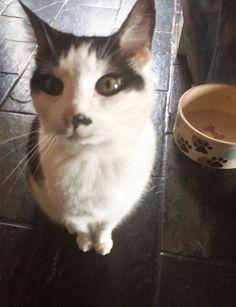 Cat Diary Part 2 - Deebeefairy | www.deebeefairy.com