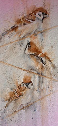 Sparrows by Sylvia Farrow