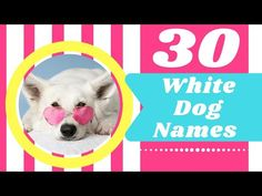 Top 30 Best White Dog Names Male And Female With Meaning 2021! Unique Dog Names Female ! Puppy Names - YouTube Police Dog Names, Dog Names Male, Cute Names For Dogs, Puppy Names, Police Dogs, Pet Names, Most Popular Dog Names, Best Dog Names, Best Dogs