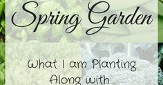 I love gardening! I especially love that it;s saving me money on my grocery bill every month! So I wanted to share what's going into my spring garden and give you a little encouragement to start your own small space gardens!