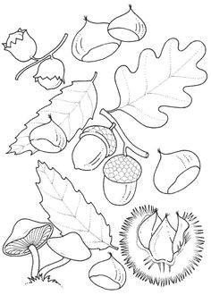 coloring page Leaves on Kids-n-Fun. Coloring pages of Leaves on Kids-n-Fun. More than coloring pages. At Kids-n-Fun you will always find the nicest coloring pages first! Free Printable Coloring Pages, Coloring Book Pages, Coloring Pages For Kids, Coloring Sheets, Autumn Crafts, Summer Crafts, Gland, Leaf Coloring, Autumn Activities