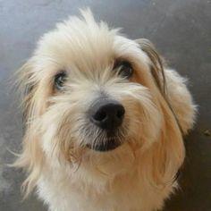 <3 #adorable #lapdog