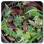 Organic High Mowing Mesclun Mix