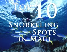 If you are in search of the best snorkeling in Maui, you're in luck! Read more about the Top 10 Maui Snorkeling Spots. Trip To Maui, Hawaii Vacation, Maui Hawaii, Vacation Trips, Dream Vacations, Hawaii 2017, Best Vacation Spots, Beach Vacations, Vacation Places