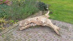 Stuk boom, Zeeland